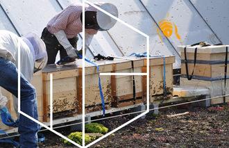 Bienen für Stadt-Kinder