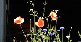 Einen grossen Blumenstrauss an alle