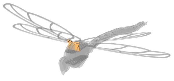 Flügel fixiert