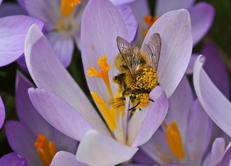 Wildbienen in Zürich