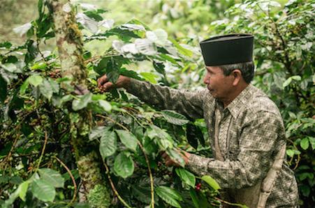 Orang Utan Coffee Projekt