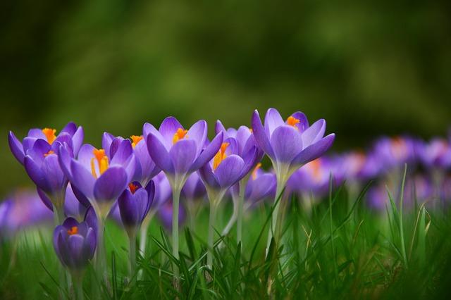 Du  bist super! Frühlingsblumen für dich!