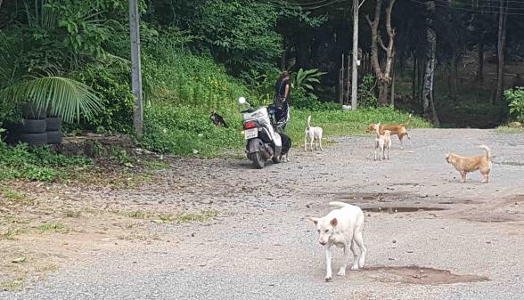 Strassenhunde in Not!