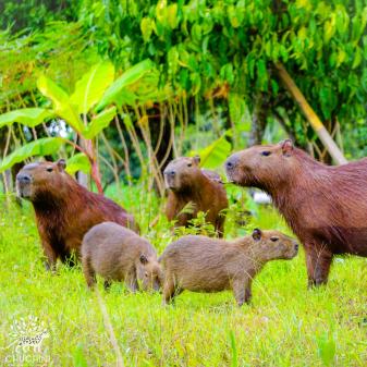 Wildlife in Rainforest