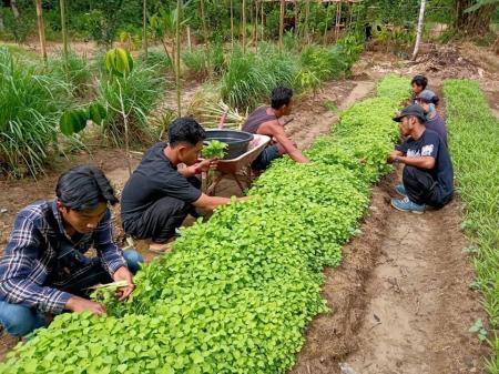 FICUS Projekt Sumatra
