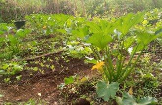 Ferme agro-écologique