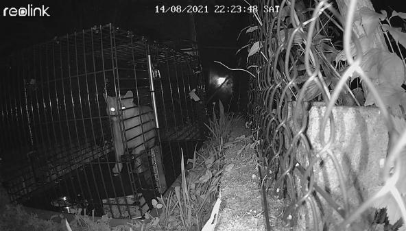 Neue Katzenfalle + Kamera